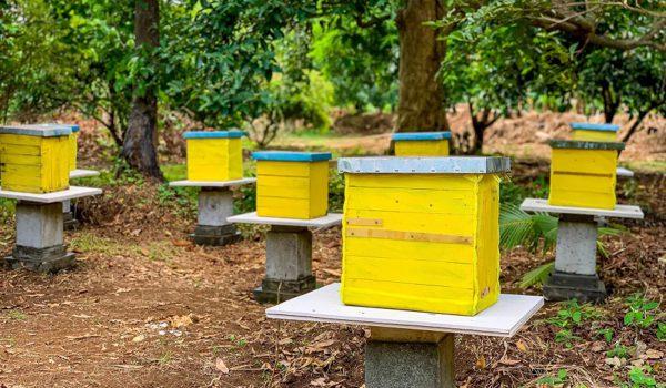 alphaland-balesin-honeybee-farm (1)